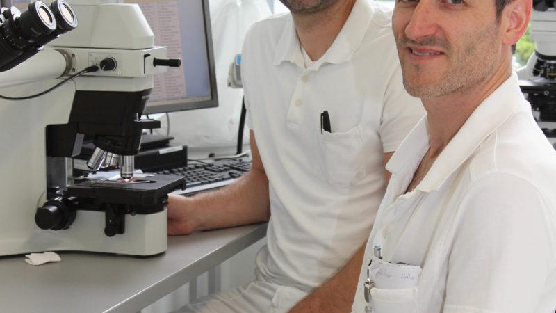 LKHF lädt zu Minisymposium zu humanem Mikrobiom