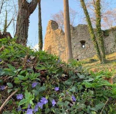 Kulturwanderweg zur Ruine Neuburg: Virtueller Rundblick auf den Schloßberg