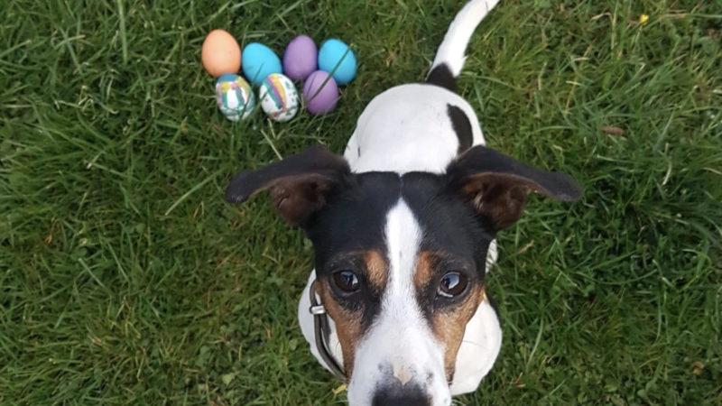 Susis Gedankenwelt #12: Braune Eier