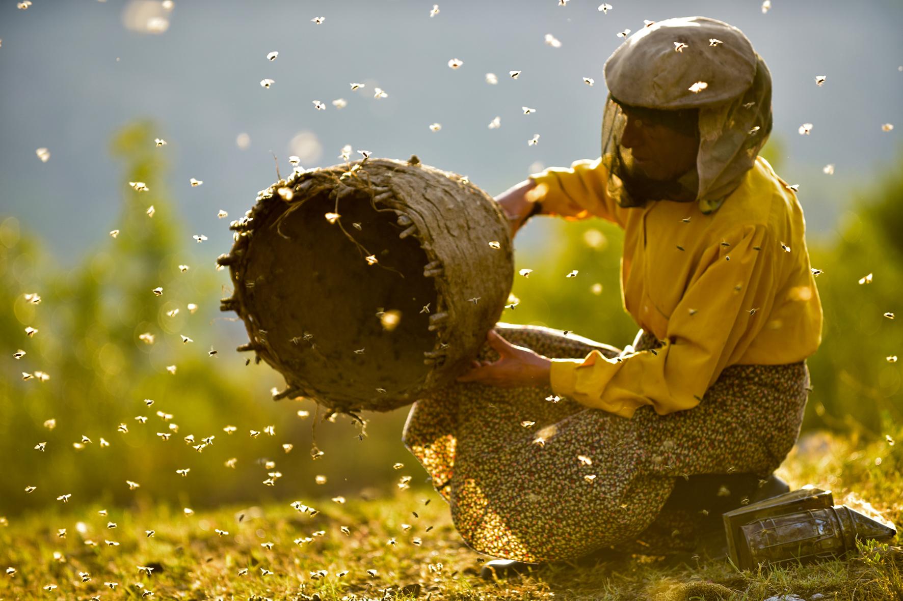 Filme unter Sternen – Open Air Rankweil: Honeyland – Land des Honigs – 14.8.