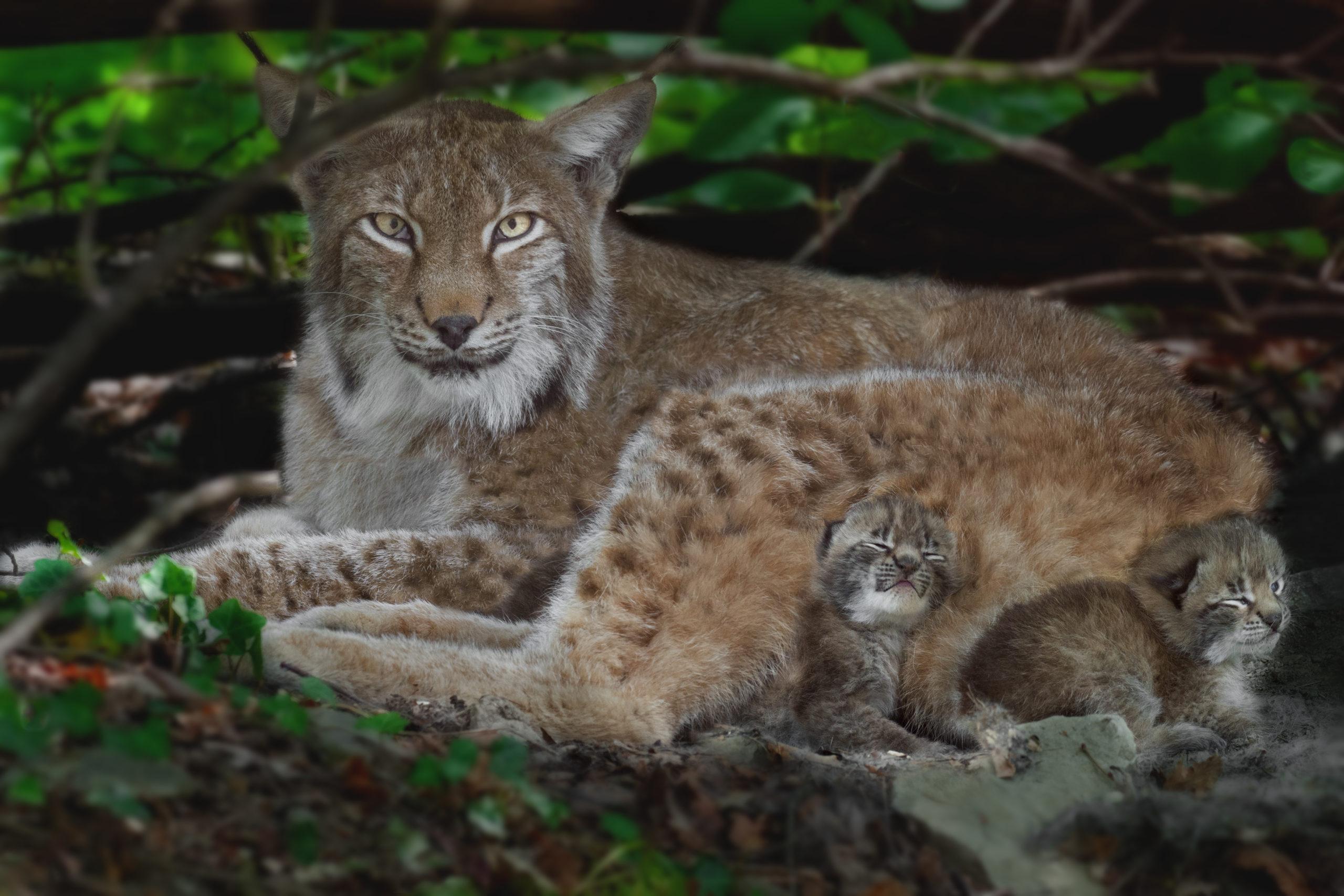 Wildpark Feldkirch bleibt vorerst geöffnet