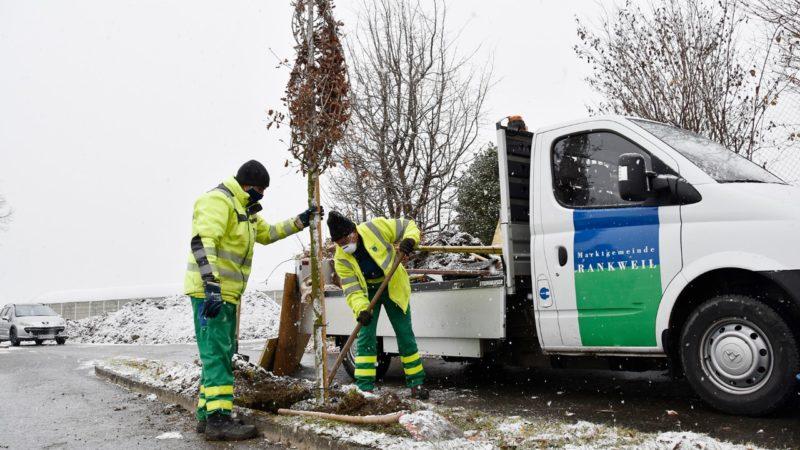Rankweil pflanzt neue Bäume gegen Klimawandel