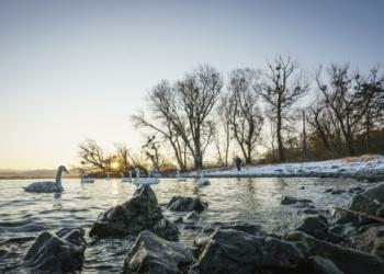 "Das erste ""Vorarlberger Naturpicknick"" führt am 16. Jänner 2021 zum Birdwatching an den Bodensee. © Dietmar Denger/Vorarlberg Tourismus"